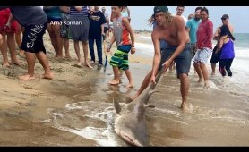Video Shows Men Catching Shark Off Coast of North Carolina | ABC World News Tonight | ABC News